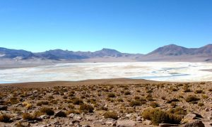 Salar-del-Huasco-Collacagua--Andes-Altiplanicos